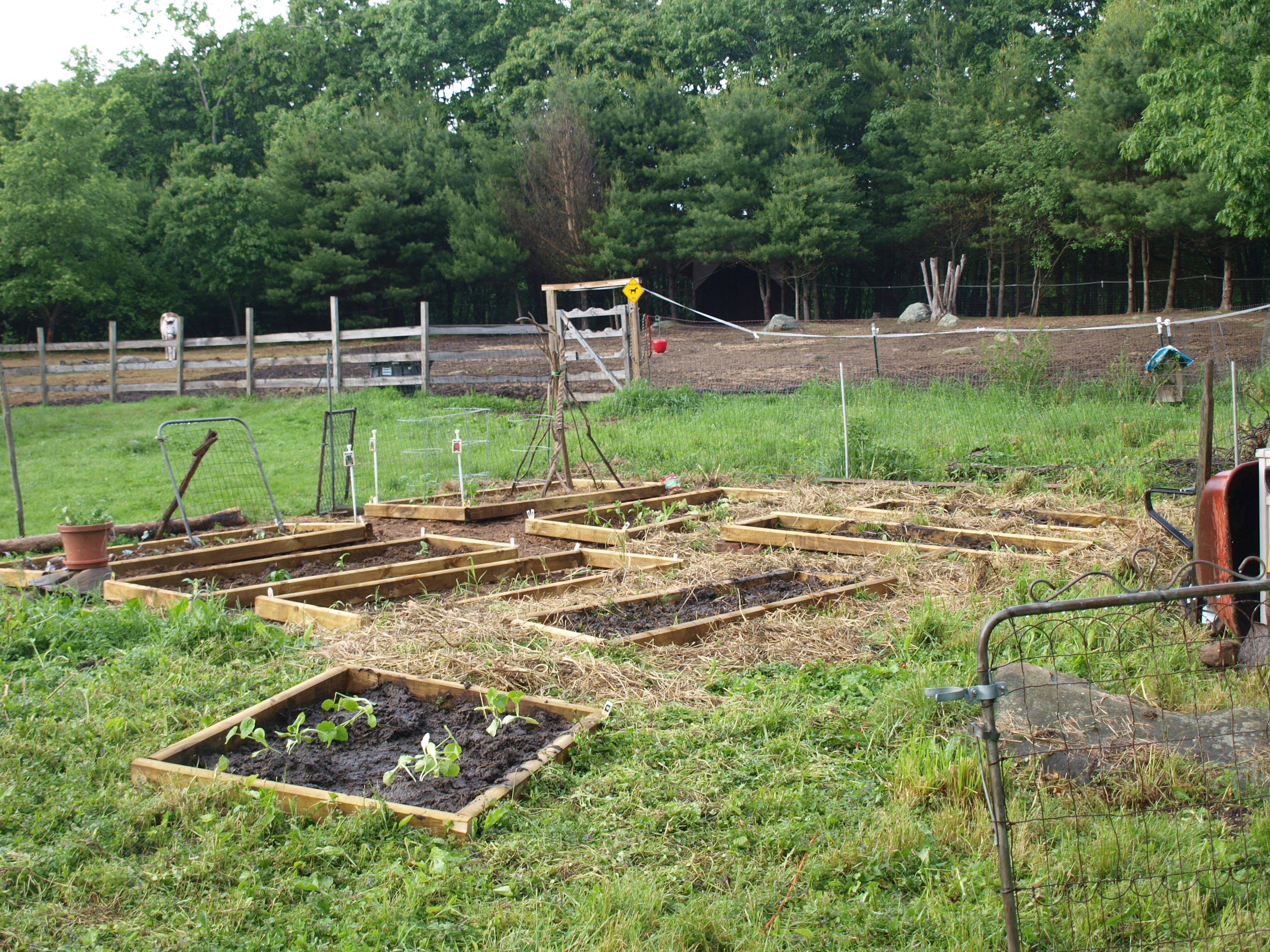Pictures Of A Garden garden is in! |